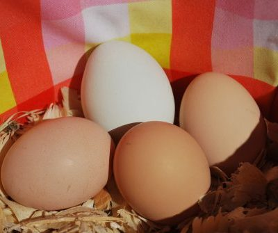 Pastured Eggs Raleigh